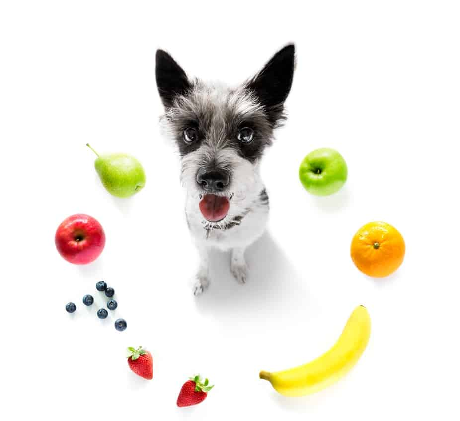 Which Diet is Best for Your Dog? 5