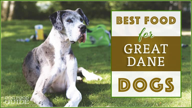 Best Dog Food For Great Danes: Top Puppy, Adult & Senior Recommendations for 2021 1