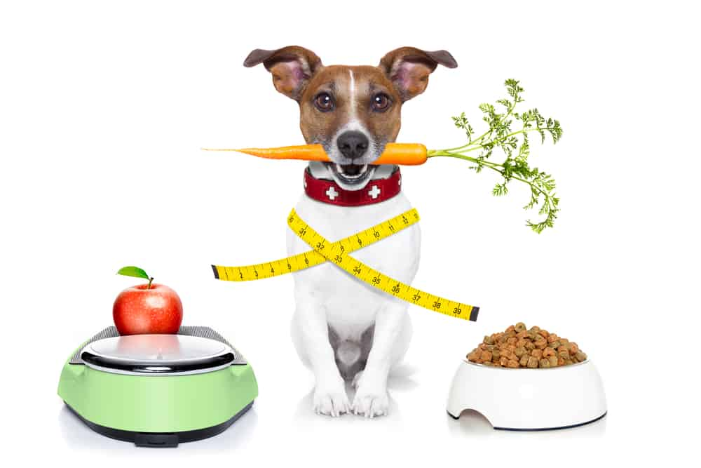 Which Diet is Best for Your Dog? 6