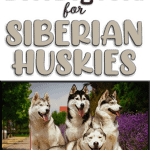 10 Best & Healthiest Dog Food for Siberian Huskies in 2020