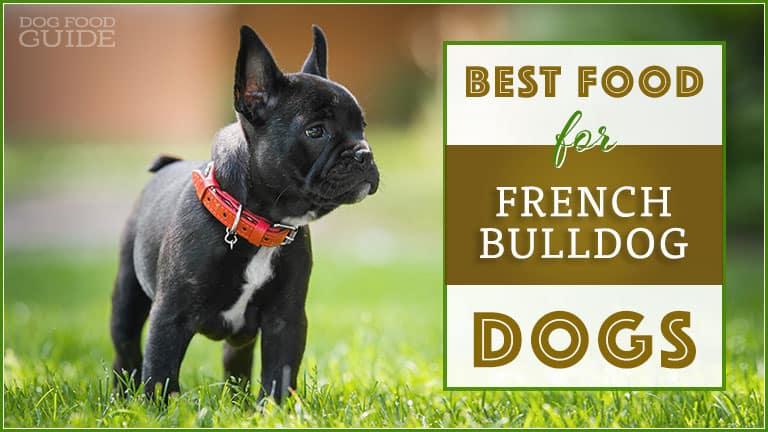 best-french-bulldog-food