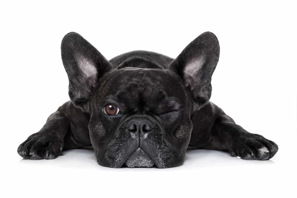 10 Best Dog Foods for French Bulldogs in [year] 27