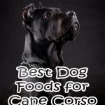 10 Best (Healthiest) Dog Food for Cane Corsos In 2020