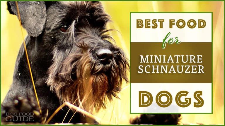 Best Dog Food for Miniature Schnauzers