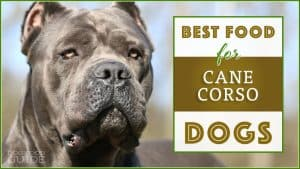 10 Best (Healthiest) Dog Food for Cane Corsos In 2020 1