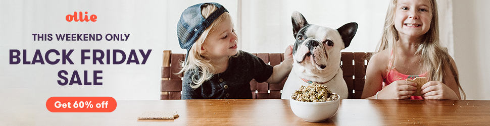 2020 Cesar Dog Food Review: Tasty Meals For Your Little Buddy 2