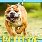 10 Best & Healthiest Dog Food for Bulldogs in 2021