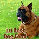 10 Best & Healthiest Dog Food for Boxers in 2021