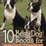 10 Best Dog Foods for Boston Terriers in [year]: Best Brands Revealed!