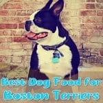 10 Best (Healthiest) Dog Food for Boston Terriers in 2020: Best Brands Revealed!