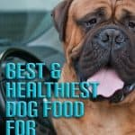 10 Best & Healthiest Dog Food For Mastiffs in 2021