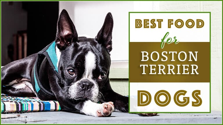 10 Best (Healthiest) Dog Food for Boston Terriers in 2020: Best Brands Revealed! 1