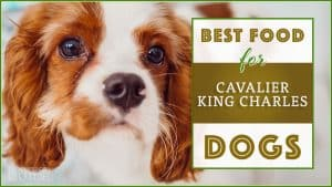best dog foods for cavalier king charles