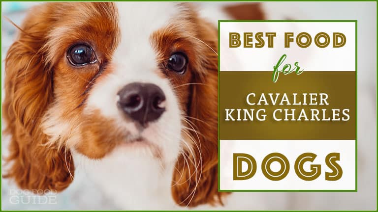 best dog foods for cavalier king charles