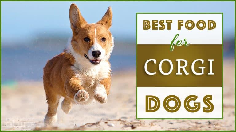 best dog food for corgi