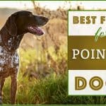 10 Best (Healthiest) Dog Foods for German Shorthaired Pointers in 2020