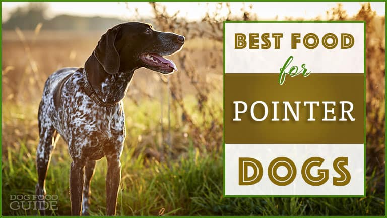 best dog foods for German Shorthaired Pointers