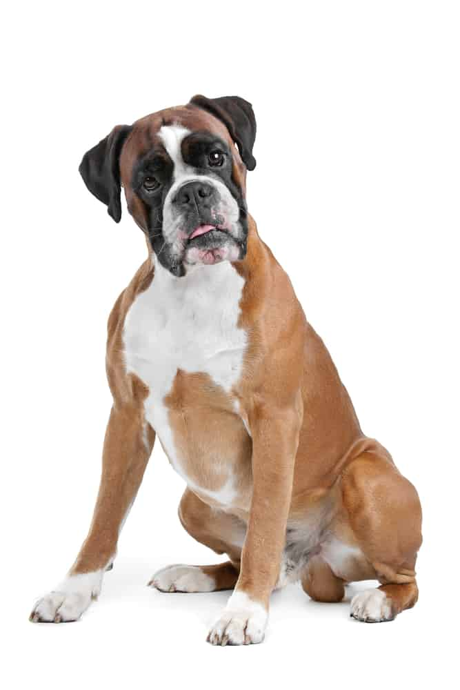 10 Healthiest & Best Dog Food for Boxers in [year] 29