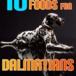 10 Best (Healthiest) Dog Food For Dalmatians In 2021