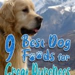 10 Best (Healthiest) Dog Food For Great Pyrenees for 2021