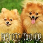 10 Best (Healthiest) Dog Food for Pomeranians In 2020