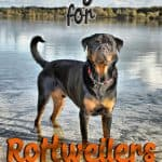 10 Best & Healthiest Dog Food For Rottweilers in 2021