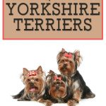 10 Best (Healthiest) Dog Food for Yorkies in 2021