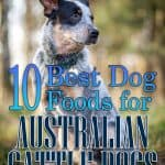 10 Best (Top Rated) Dog Foods for Australian Cattle Dogs in 2021