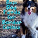 10 Best (Healthiest) Dog Food For Border Collies in 2021