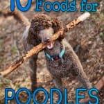 10 Best & Affordable Dog Foods for Poodles in 2021