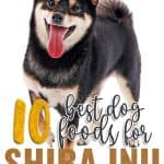 10 Best (Healthiest Options) Dog Foods for Shiba Inus in [year]