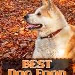 10 Best (Healthiest) Dog Foods for Akitas: Our 2020 Review