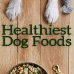 Healthiest Dog Food 2021: 20 Brands Offering Premium Products