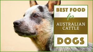 best dog foods for australian cattle dogs