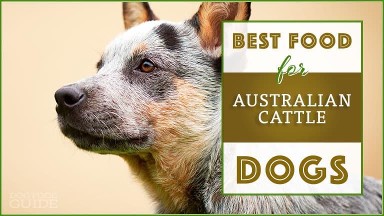 best dog foods for australian cattle dogs