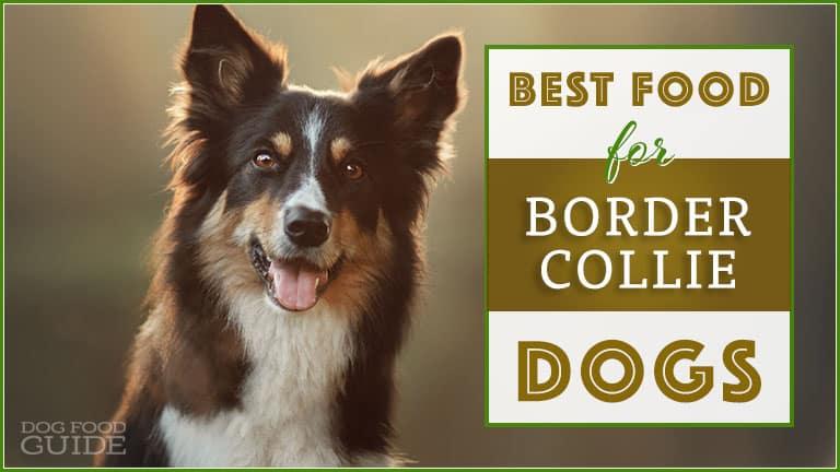 dog food for border collies