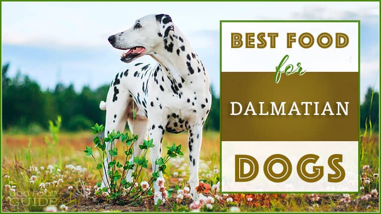 best dog food for dalmatians