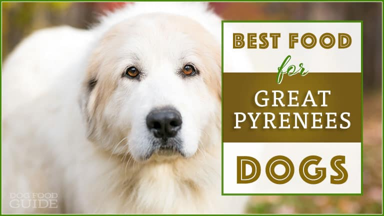 best dog food for great pyrenees