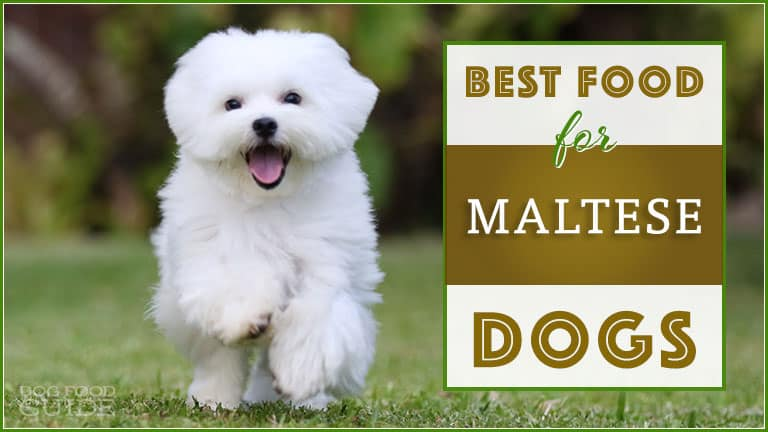 10 Best (Healthiest) Dog Food For Maltese in 2021 1