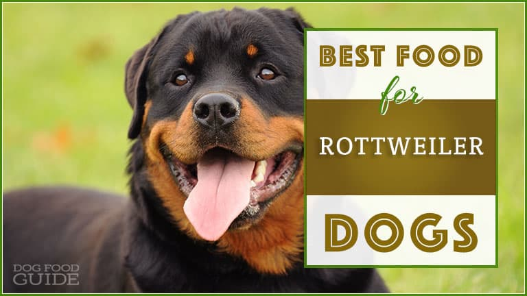 best food for rottweilers