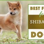 10 Best (Healthiest Options) Dog Foods for Shiba Inus in 2020