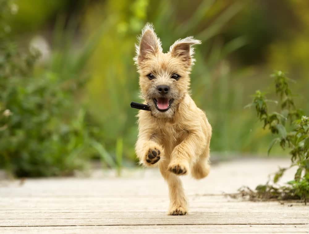 10 Best (Healthiest) Legume & Pea Free Dog Food in [year] 37