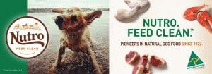 10 Best (Healthiest) Dog Foods without Peas & Legumes in 2021 26