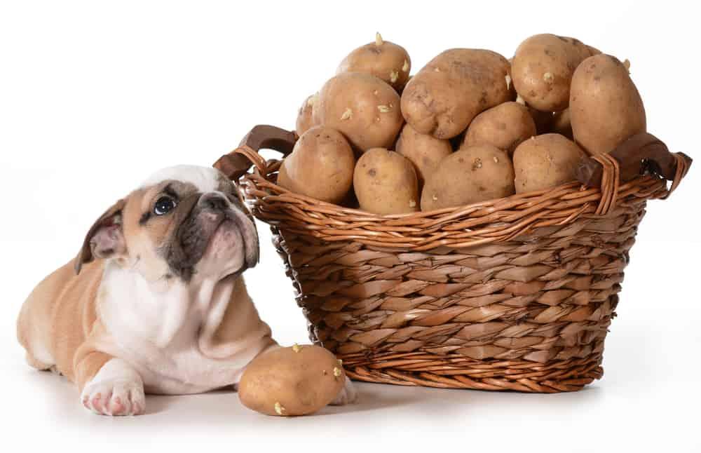 potato free dog food