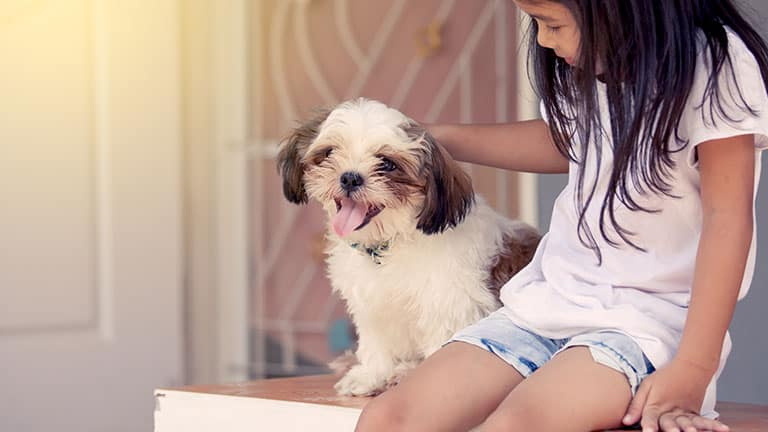 best dog food for Shih Tzus