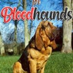 10 Best & Healthiest Dog Foods For Bloodhounds in 2021