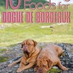 10 Best (Healthiest) Dog Food For Dogue De Bordeaux in 2021