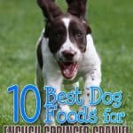 10 Best & Healthiest Dog Food For English Springer Spaniels in 2021