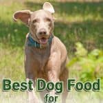 Best Dog Food for Weimaraners: Top Puppy, Adult & Senior Recommendations for 2021