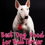 10 Best (Healthiest) Dog Foods For Bull Terriers in 2020
